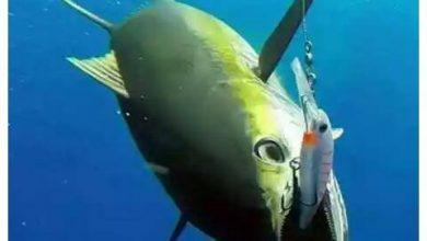 Photo of ترتيبات رحلة صيد سمك فى البحر الأحمر